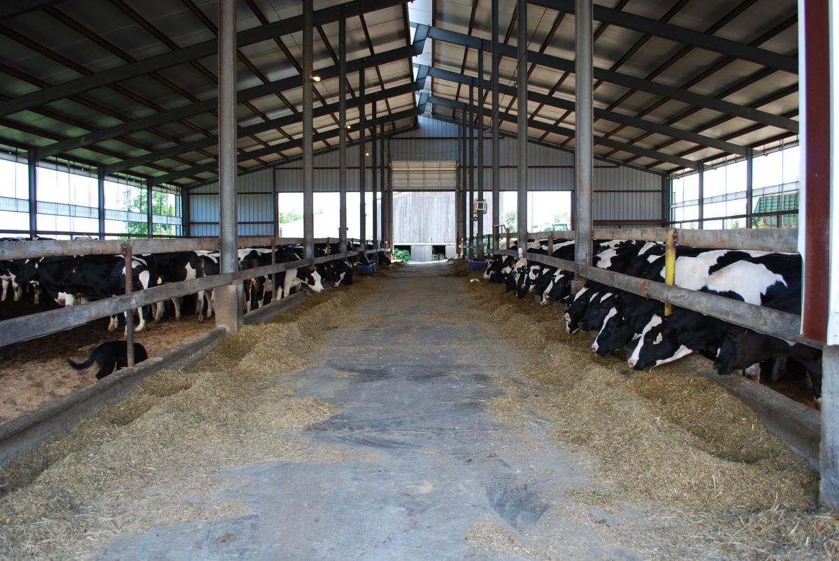 Composting Bedded Pack Dairy Barns Air Quality